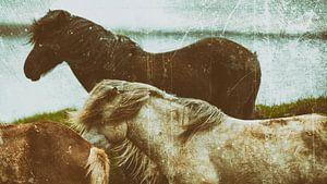 Rispað 2 van Islandpferde  | IJslandse paarden | Icelandic horses