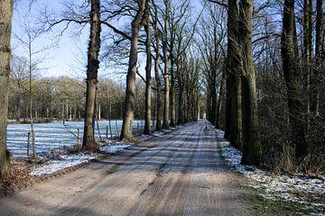 Sneeuwlandschap met bevroren zandweg van Twentse Pracht