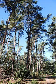 Bomen in het bos von Sharida Mohaboe