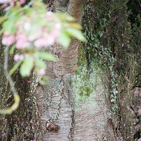 boomstronk van marijke servaes