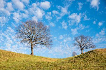 arbres à feuilles caduques nus sur la colline, grand ciel bleu nuageux sur Susanne Bauernfeind