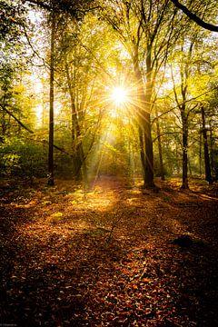 Sonneneinstrahlung Überlastung von Arjen Uijttenboogaart