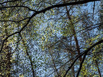 Een bos in de lente van Hanneke Luit