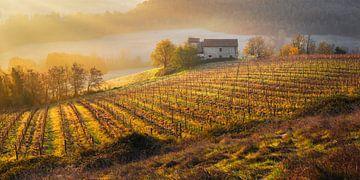 Wijngaard in Toscane bij zonsopkomst van Chris Stenger