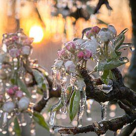 Sunset blossoms van Max ter Burg Fotografie