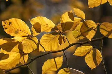 gele herfstbladeren van Tania Perneel