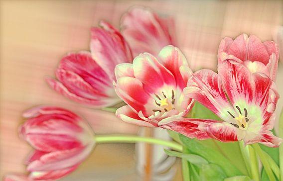 Tulpenstrauß van Rosi Lorz