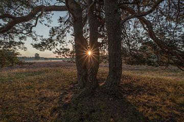 Een stralende ochtendzon (zonnester) door een boom van Moetwil en van Dijk - Fotografie