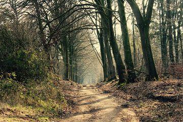 Schoonheid van het bos sur Lisa-Valerie Gerritsen