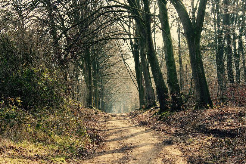 Schoonheid van het bos van Lisa-Valerie Gerritsen