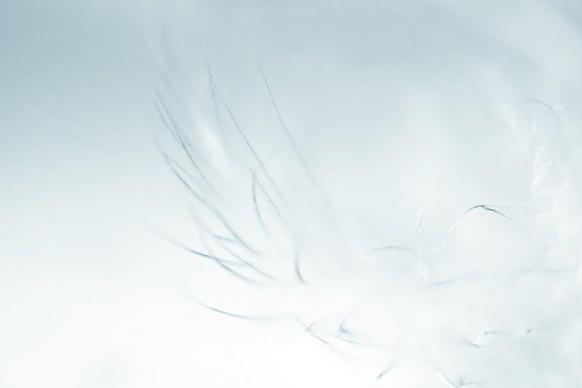 Feather in blue van Greetje van Son