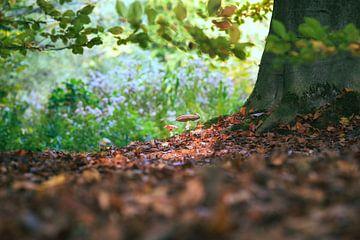 Fliegenpilze im Sonnenlicht von Fotografiecor .nl