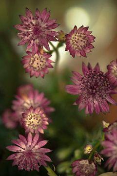 Blume # 10 von tim eshuis