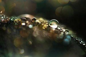 Macro - Sparkle van