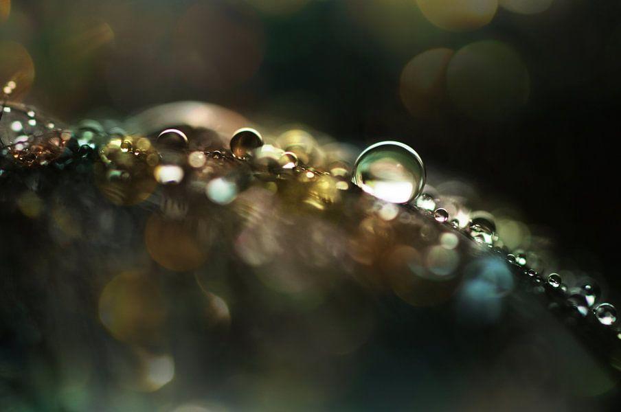 Macro - Sparkle