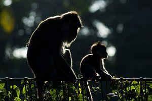 Moeder met baby (aap) van