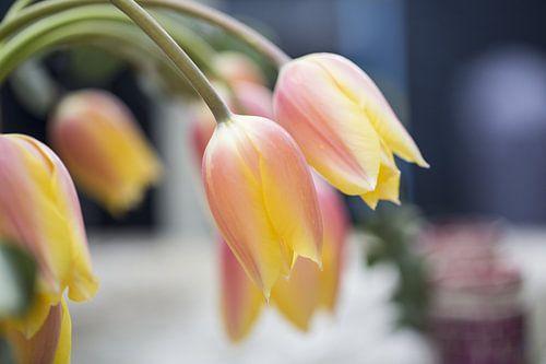 Gele Tulpen von Marc  Verbeek