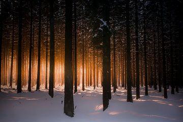 Rechte bomen van Erwin Stevens