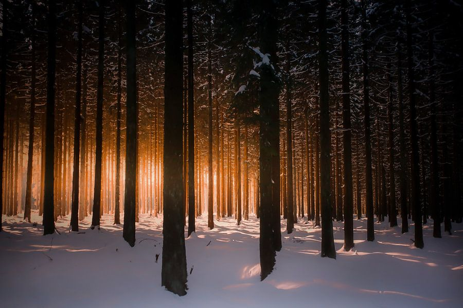 Rechte bomen