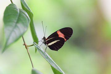 Vlinder op een blad met mooie onscherpe achtergrond van Kim de Been