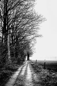 Ich sehe die hohen Bäume entlang des Gartenweges meines Vaters von Fotografie Jeronimo