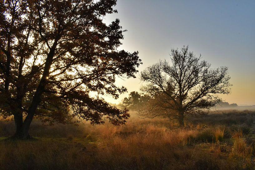 Goldener Herbst von Stefan Wiebing Photography