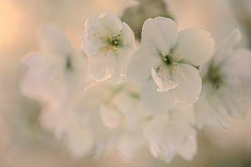 Blüte #2 von tim eshuis