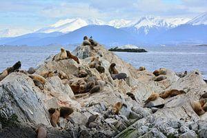 Zeehonden aan het einde van de wereld van Bianca Fortuin