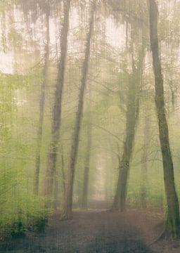 abstract in het mistige bos van Tania Perneel