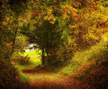 Herfstkleuren in Zuid-Limburg van