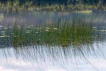 Gräser im Wasser von Henk Hulshof