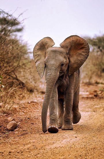 Junger Elefant, Südafrika