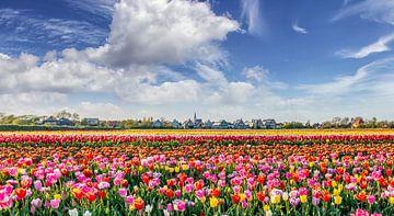 Texel - Den Hoorn - Bloemenzee von Texel360Fotografie Richard Heerschap