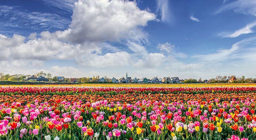 Texel - Den Hoorn - Bloemenzee van Texel360Fotografie Richard Heerschap