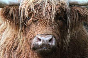 Portret Hooglander in Nederland van