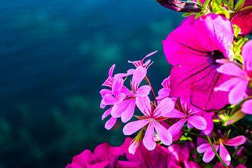 Bloemen aan de Hofvijver van
