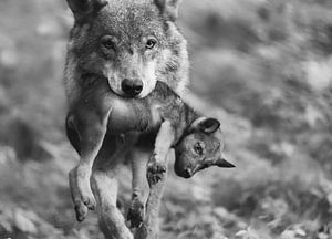 Wolf met welp van Eveline Lenderink