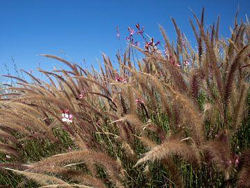 Gräser vor blauem Himmel von Colorfolk