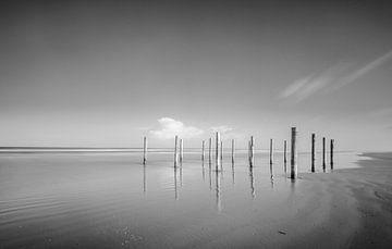 Polen am Strand während eines schönen Wintertages in Schiermonnikoog Insel in der Waddensea Region von Sjoerd van der Wal