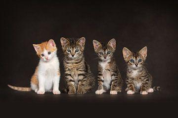 Katten Poes Kittens van Patrick Reymer