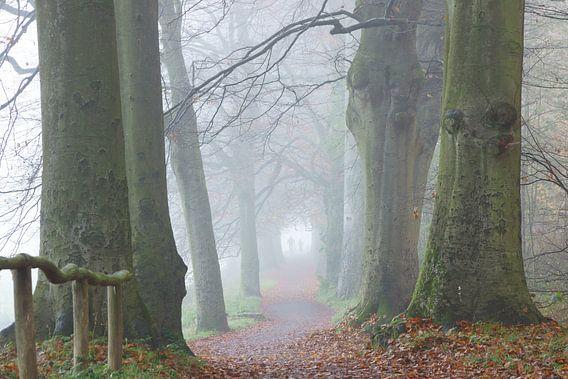 Beukenbomen in de mist