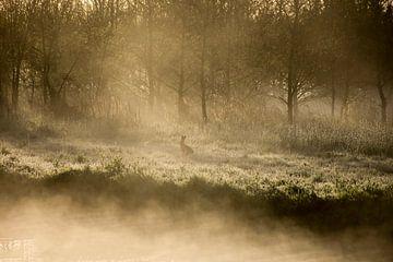 Hase im Morgenlicht von Charlene van Koesveld