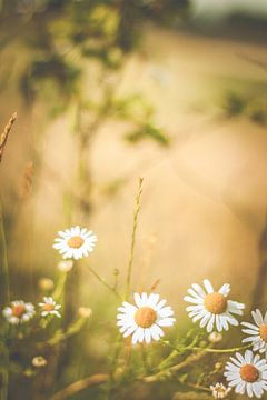 natuur bloemen sur Anne-Fleur Eggengoor