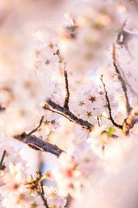 Kersenbloesem van Ratna Bosch