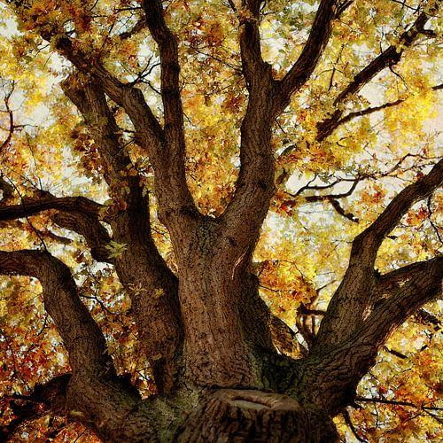 Chêne en automne sur Ines van Megen-Thijssen