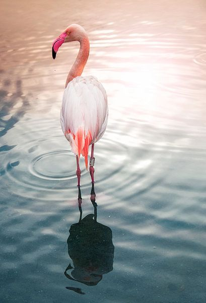 Flamingo N°3 van Photographix by Moni Schmitt Monika