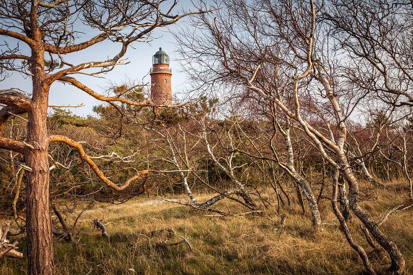 Windgebeugte Bäume beim Leuchtturm Darßer Ort von Christian Müringer