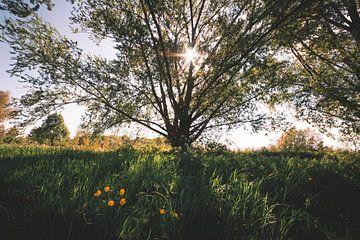 Gelbe Blumen mit Sonnenstrahlen durch die Bäume von Niels Eric Fotografie