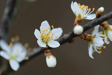 Blüte von Eline Bouwman