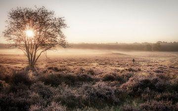 Nebel auf dem Moor von Connie de Graaf